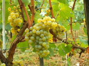 winecalifornia