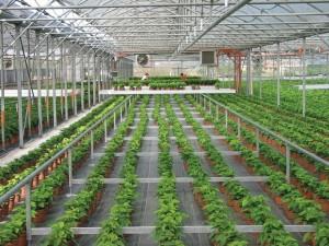 Agroenergy-serra con automazione 2_piante in vaso lr