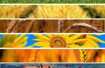 agricoltura20